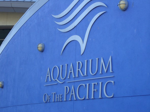 aquarium of the pacific 007