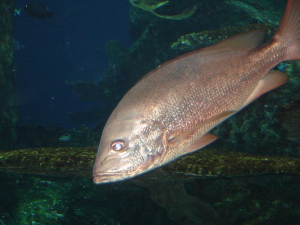 aquarium of the pacific 011